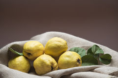 Quinces. Still life with premium fresh quinces freshly harvested to cook Royalty Free Stock Image