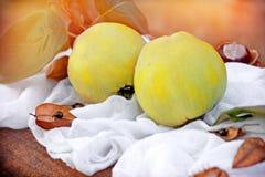 Quinces - Autumn fruit. Fresh quinces - Autumn fruit on table Stock Image
