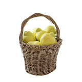 Quinces in homemade basket Stock Photos