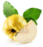 Quinces isolated on the white background Royalty Free Stock Photo