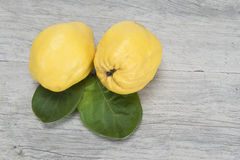 Quinces over wood Stock Image