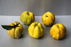 Quinces Royalty Free Stock Photography