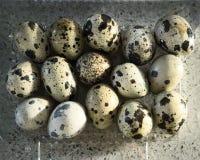 Quindici uova di quaglia in un chiaro colpo di plastica del vassoio da sopra sopra un uomo hanno fatto il fondo di pietra Fotografie Stock Libere da Diritti