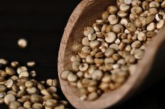 Quinoa και ξύλινο spatula Στοκ Εικόνα