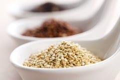 Quinoa σιτάρι στοκ φωτογραφία με δικαίωμα ελεύθερης χρήσης