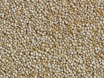 quinoa σιταριού Στοκ φωτογραφία με δικαίωμα ελεύθερης χρήσης