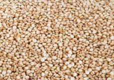 Quinoa Royaltyfria Bilder