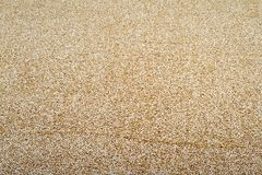 Quinoa Foto de Stock Royalty Free