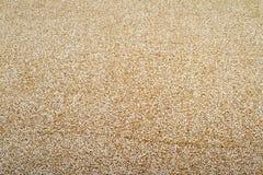 Quinoa Royalty-vrije Stock Foto