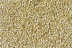 Quinoa Zdjęcie Royalty Free