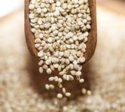 Quinoa Immagine Stock