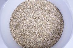Quinoa Imagen de archivo