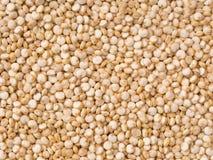 Quinoa background Stock Images