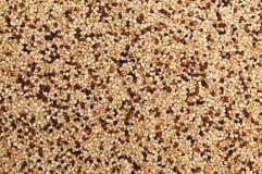 Quinoa (blanc, noir et rouges) Images libres de droits