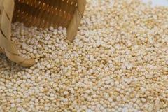 Quinoa blanca Imágenes de archivo libres de regalías