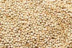 Quinoa blanca orgánica Fotografía de archivo