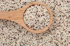 Quinoa con il cucchiaio di legno Fotografie Stock Libere da Diritti