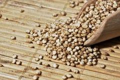 Quinoa et une spatule en bois Images libres de droits