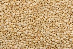 Quinoa Gold Stock Photo