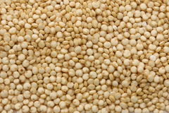 Quinoa Gold Royalty Free Stock Image