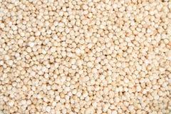 Quinoa grain Stock Photo