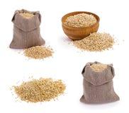 Quinoa grains. Set of quinoa grains on white stock image