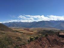 Quinoa landbouwbedrijf in Peru Royalty-vrije Stock Afbeelding