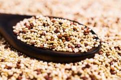 Quinoa mista dei semi asciutti Immagine Stock Libera da Diritti