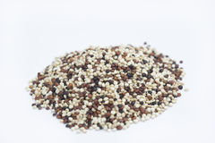 Quinoa mix. Sortment of different quinoa species Royalty Free Stock Photography