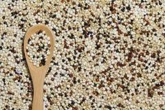 Quinoa negra blanca roja mezclada con una cuchara de madera Imágenes de archivo libres de regalías