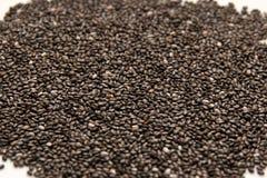 Quinoa nera Immagine Stock