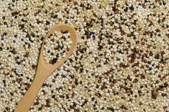 Quinoa noir blanc rouge mélangé avec une cuillère en bois Images stock