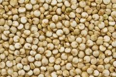 Quinoa organica Fotografia Stock Libera da Diritti