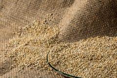 Quinoa på den glass maträtt- och linnepåsen Royaltyfri Foto