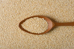 Quinoa real en una cuchara de madera Fotografía de archivo libre de regalías