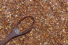 Quinoa roja con la cuchara de madera Fotos de archivo libres de regalías
