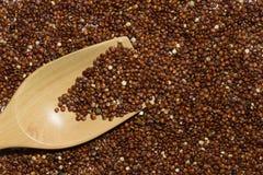 Quinoa roja con la cuchara de madera Imagen de archivo libre de regalías