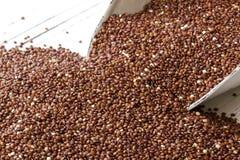 Quinoa rossa Immagine Stock