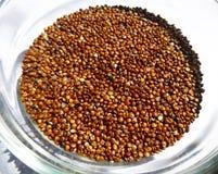 Quinoa rossa Immagini Stock