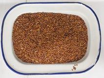 Quinoa rouge dans un plat d'émail Image libre de droits
