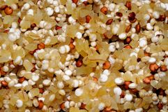 Quinoa seeds and bulgar wheat. Royalty Free Stock Photos