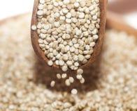 Quinoa Royalty Free Stock Photo
