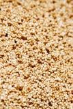 Quinoa Stock Image