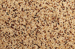 Quinoa (white, black and red) Royalty Free Stock Images