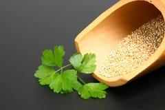 quinoafrö Royaltyfri Foto