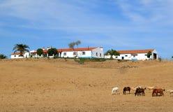 Quinta portoghese tipico nella regione Alentejo fotografie stock libere da diritti