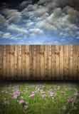 Quintal bonito com açafrões Imagem de Stock