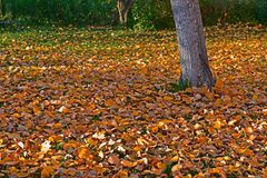 Quintal no outono Foto de Stock Royalty Free