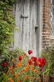 Quintessential vibrant English country garden scene landscape wi stock photography