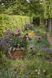 Quintessential vibrant English country garden scene landscape wi stock image